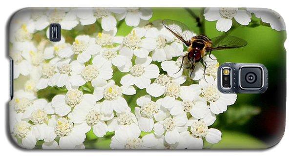 Transverse Flower Fly Galaxy S5 Case