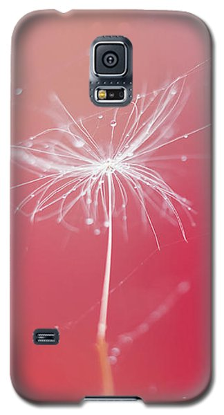 Trapped In Vain Galaxy S5 Case