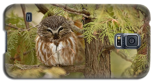 Galaxy S5 Case featuring the photograph Treasures Of The Forest by Everet Regal
