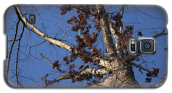 Tree And Branch Galaxy S5 Case
