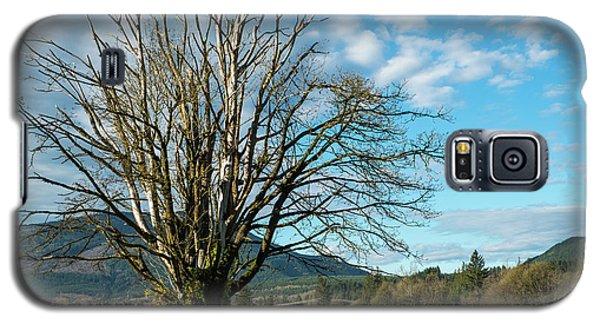 Tree And Sky Galaxy S5 Case