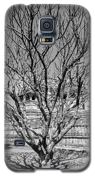 Tree And Temple Galaxy S5 Case