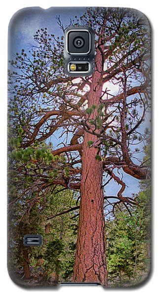 Tree Cali Galaxy S5 Case