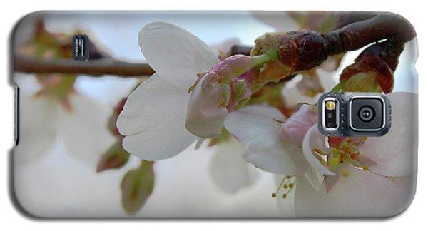 Dogwood Branch Pink Galaxy S5 Case