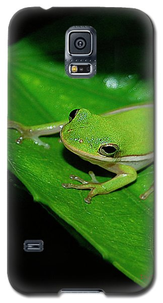 Tree Frog On Hibiscus Leaf Galaxy S5 Case