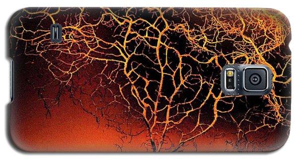 Tree In Light Galaxy S5 Case