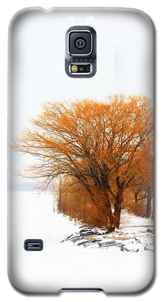 Tree In The Winter Galaxy S5 Case