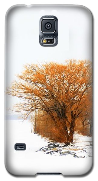 Tree In The Winter Galaxy S5 Case