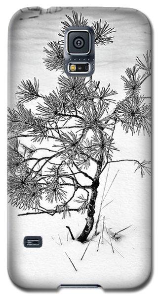 Tree In Winter Galaxy S5 Case