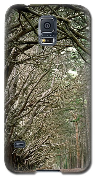 Tree Lane Galaxy S5 Case by Art Shimamura