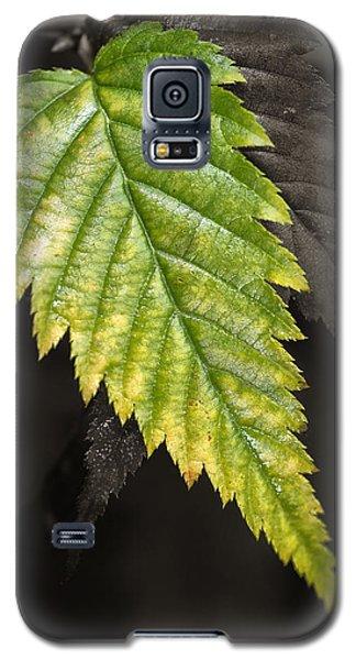 Tree Leaf Study  Galaxy S5 Case