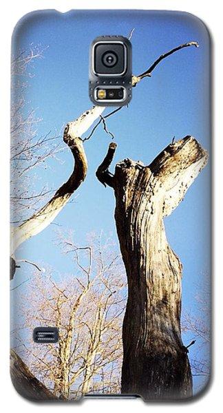 Sky Galaxy S5 Case - Tree by Matthias Hauser