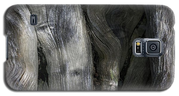 Galaxy S5 Case featuring the photograph Tree Memories # 20 by Ed Hall