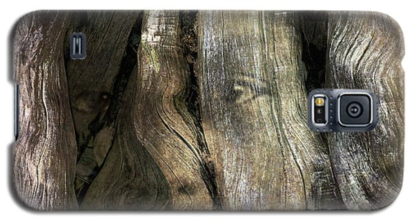 Galaxy S5 Case featuring the photograph Tree Memories # 24 by Ed Hall