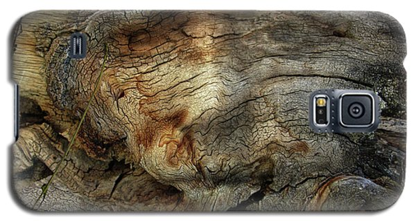 Galaxy S5 Case featuring the photograph Tree Memories # 36 by Ed Hall