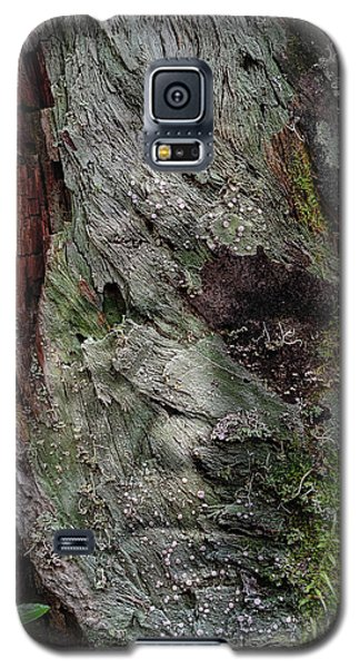 Galaxy S5 Case featuring the photograph Tree Memories # 38 by Ed Hall