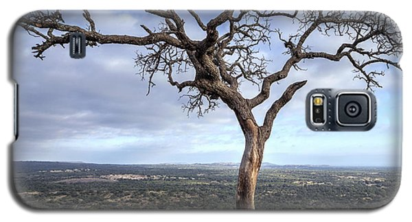 Tree On Enchanted Rock - Square Galaxy S5 Case