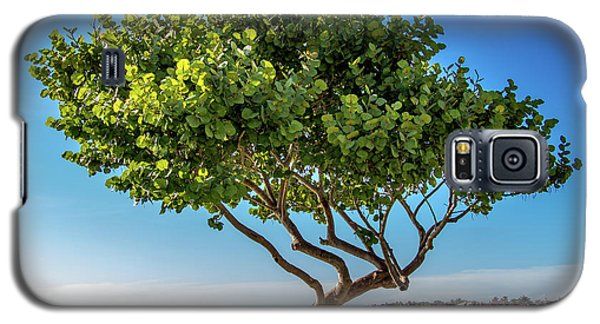 Tree On The Bay Galaxy S5 Case