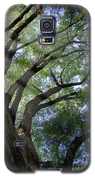 Galaxy S5 Case featuring the photograph Tree Rays by Brian Jones