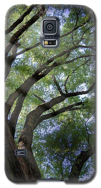 Tree Rays Galaxy S5 Case