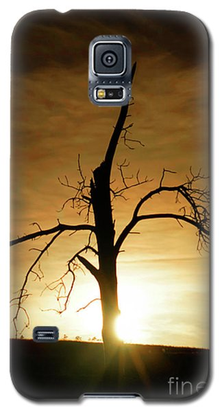 Tree Silhouette At Sundown Galaxy S5 Case