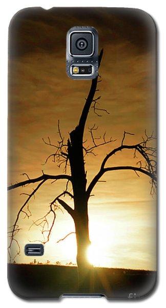 Tree Silhouette At Sundown Galaxy S5 Case