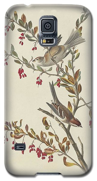 Tree Sparrow Galaxy S5 Case by Dreyer Wildlife Print Collections