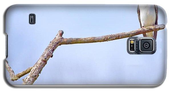 Tree Swallow On Branch Galaxy S5 Case by A Gurmankin
