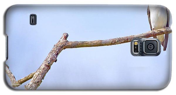 Tree Swallow On Branch Galaxy S5 Case