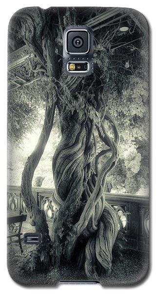 Tree Trunk Bw Series Y6693 Galaxy S5 Case