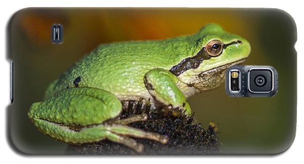 Treefrog On Rudbeckia Galaxy S5 Case