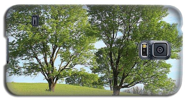 Summer Trees 4 Galaxy S5 Case