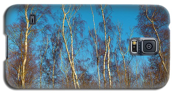 Trees And Blue Sky Galaxy S5 Case