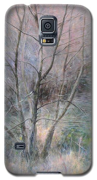 Trees In Light Galaxy S5 Case