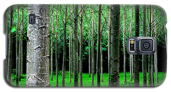 Trees In Rows Galaxy S5 Case