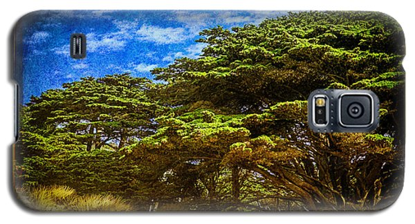 Trees On An Oregon Beach Galaxy S5 Case