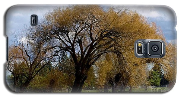 Trees Galaxy S5 Case by Ron Bissett