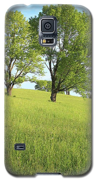 Summer Trees 2 Galaxy S5 Case