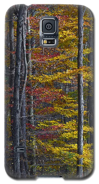 Trees With Autumn Colors 8260c Galaxy S5 Case