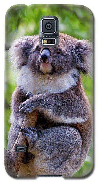 Koala Galaxy S5 Case - Treetop Koala by Mike  Dawson