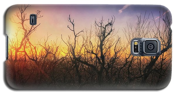 Galaxy S5 Case featuring the photograph Treetop Silhouette - Sunset At Lapham Peak #1 by Jennifer Rondinelli Reilly - Fine Art Photography