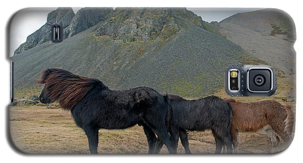Galaxy S5 Case featuring the photograph Tri - Color Icelandic Horses by Dubi Roman