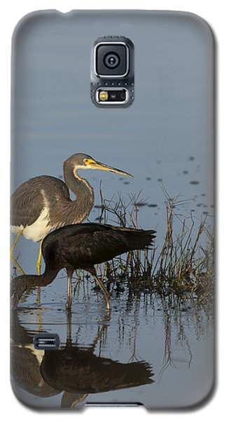 Tri-colored Heron And Glossy Ibis Galaxy S5 Case