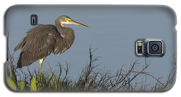 Tri-colored Heron In The Morning Light Galaxy S5 Case