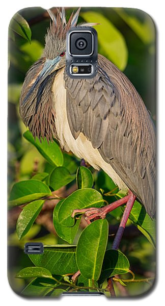 Tricolored At The Venice Rookery Galaxy S5 Case