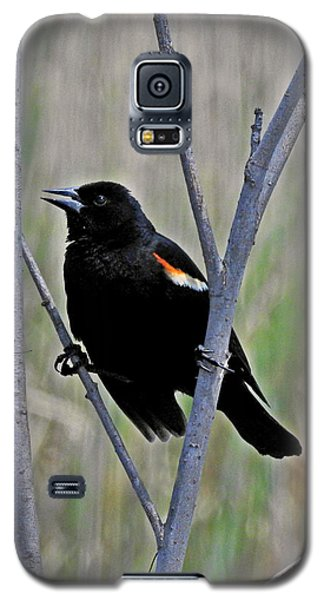 Tricolored Blackbird Galaxy S5 Case