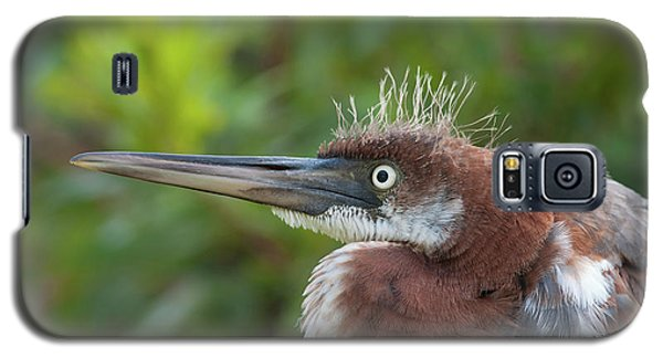 Tricolored Heron - Bad Hair Day Galaxy S5 Case