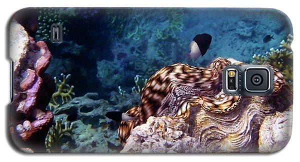 Tridacna Squamosa  Galaxy S5 Case