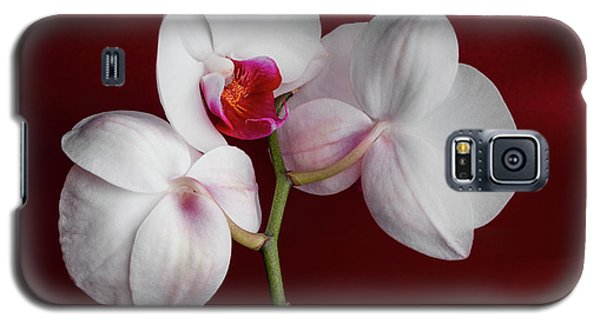 Orchid Galaxy S5 Case - Trio Of Orchids by Tom Mc Nemar