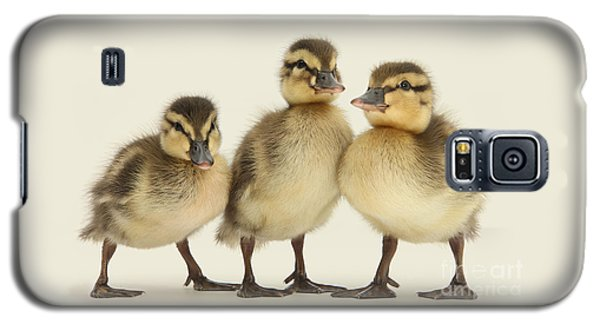 Triple Ducklings Galaxy S5 Case